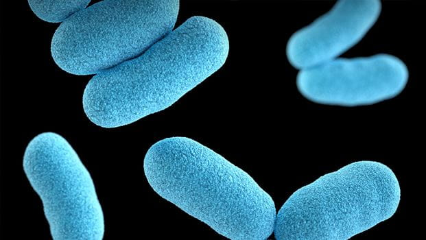 image of a group of Gram-positive, Corynebacterium diphtheriae, bacteria